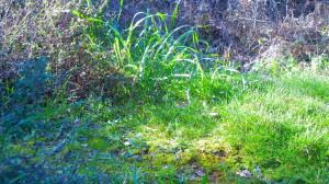 la luce scopre i misteri del bosco