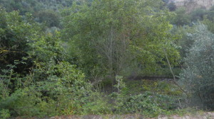 DSCN6015