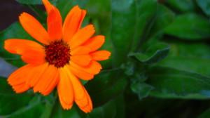 fiore come pensieri